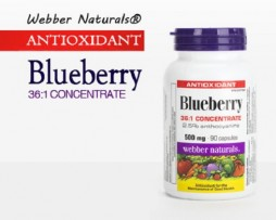 Blueberry web